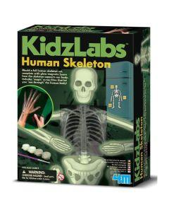 4M KidzLabs Glow Human Skeleton